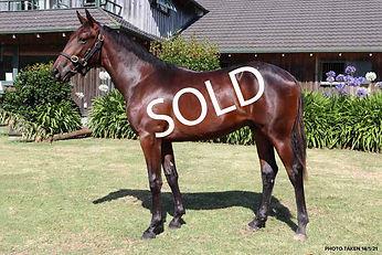 Sweet-Lou--Dream-Offer-sold.jpg