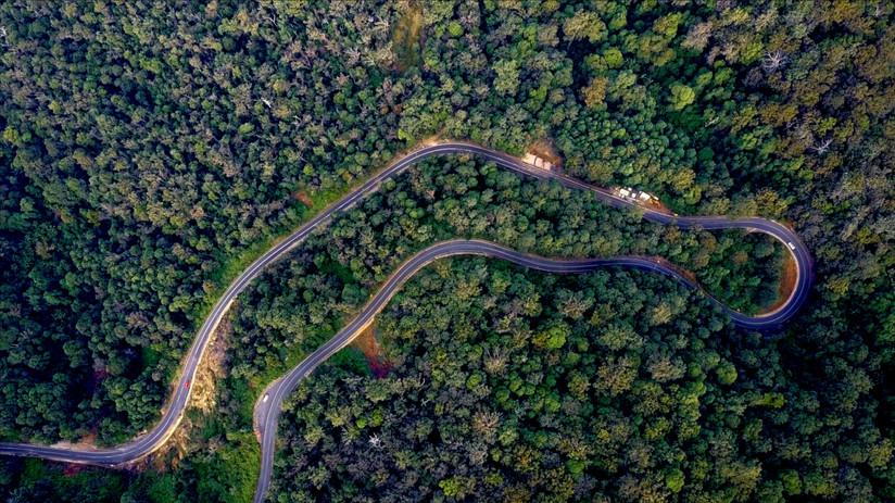 JOURNEY 4 FOREST 300dpi.jpg