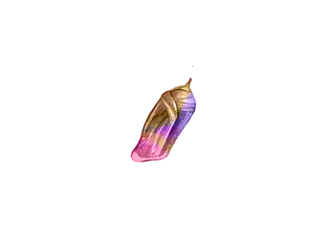 cacoon_edited.png