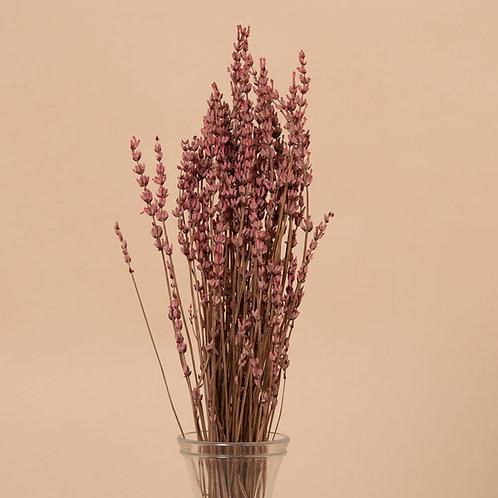 Pink Lavender Presservada