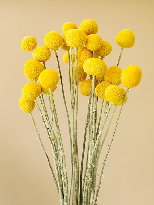 Ténis Flower-Craspedia