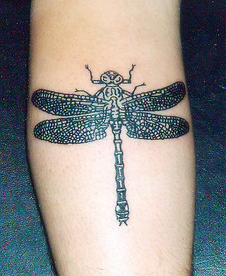Dragonfly black linework piece.