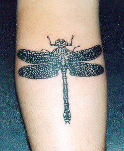 Dragonfly black linework piece.