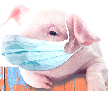 Swine Flu Facts and Fictions
