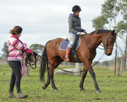 Bill being a beginners horse 2014
