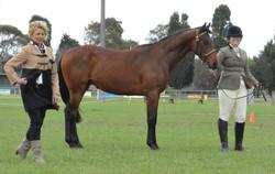 November 2013 Ballarat Ag Show