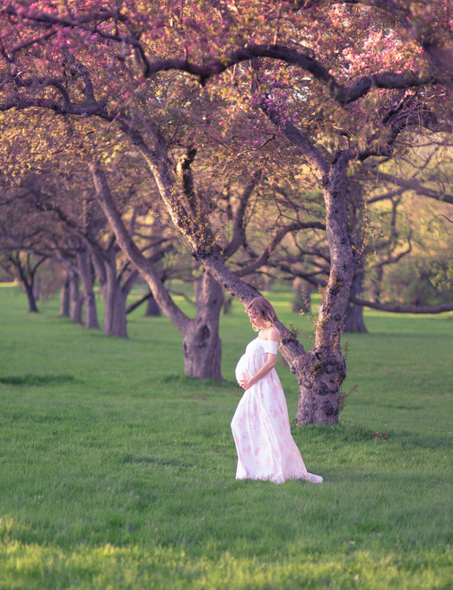Ottawa cherry blossom maternity photographer