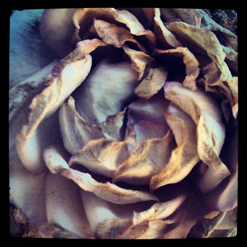 Podria ser art contemporani... però es una rosa pansida