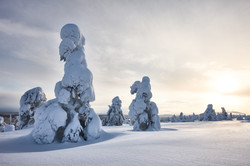 Sunny winter landscape in Lapland.jpg