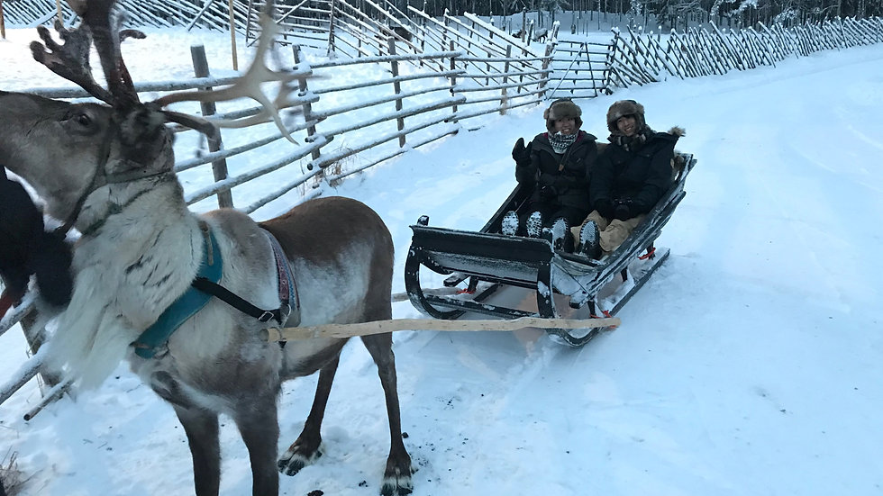 Reindeer Farm Experience with Ride!