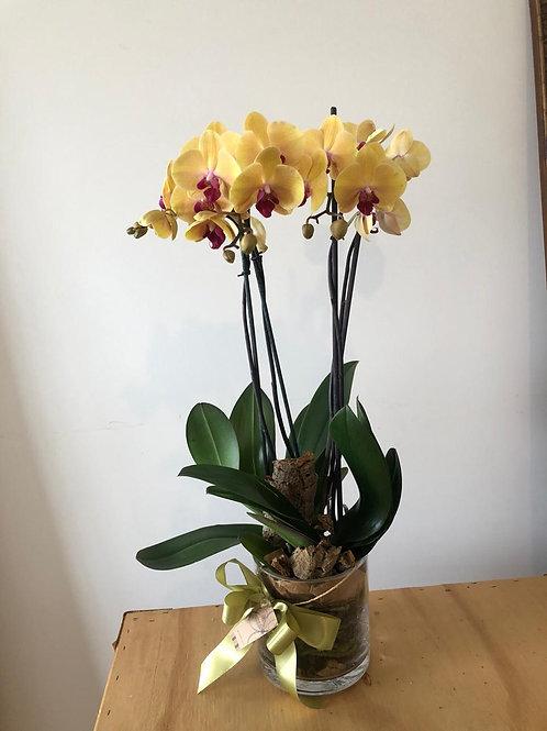 Orquídea 03 Sob consulta