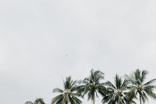 Palms V
