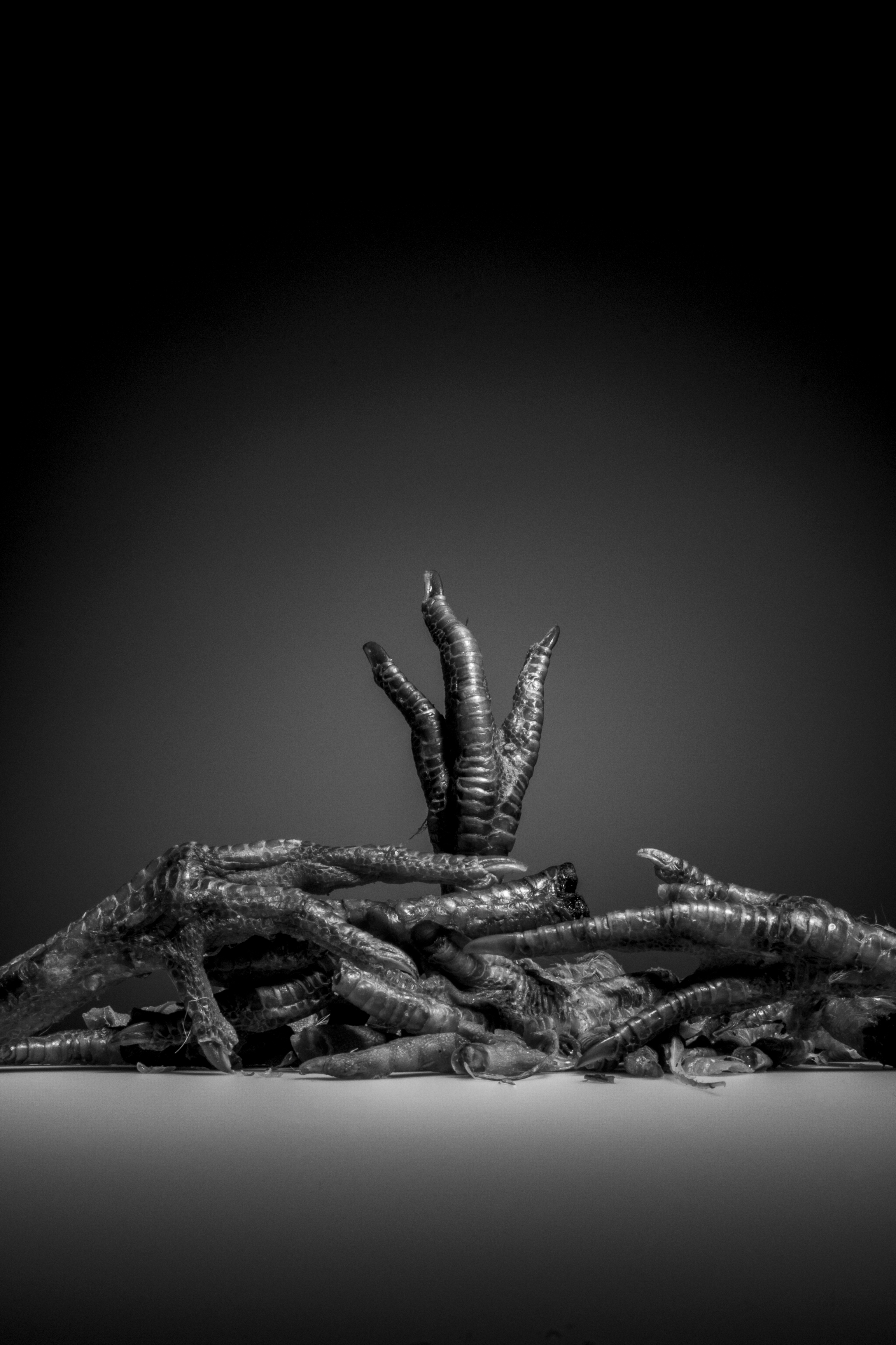 Animal Cruelty-Photo-still life-feet