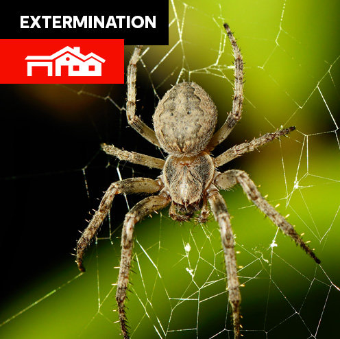 Insectes - Grande maison