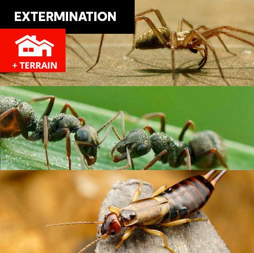 Araignées, fourmis, perce-oreilles - maison standard + terrain