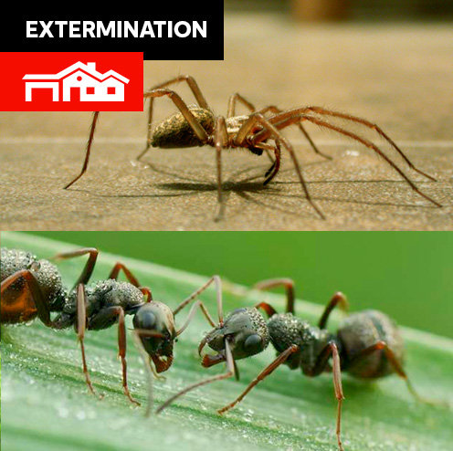 Araignées, fourmis - grande maison + 15 pieds autour