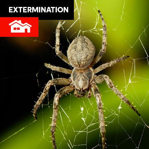 Insectes - maison standard