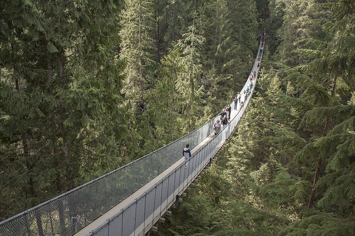 capilano-suspension-bridge-1393076_1920.