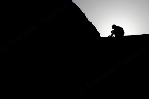 The silhouette of the monkey