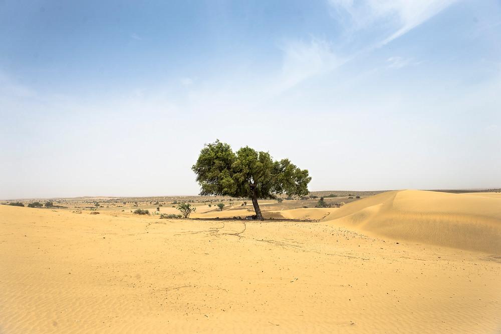 Desierto del Thar,Rajastan, India.