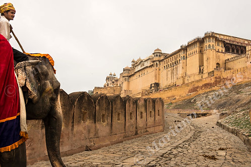 Elephant in Amer Fort