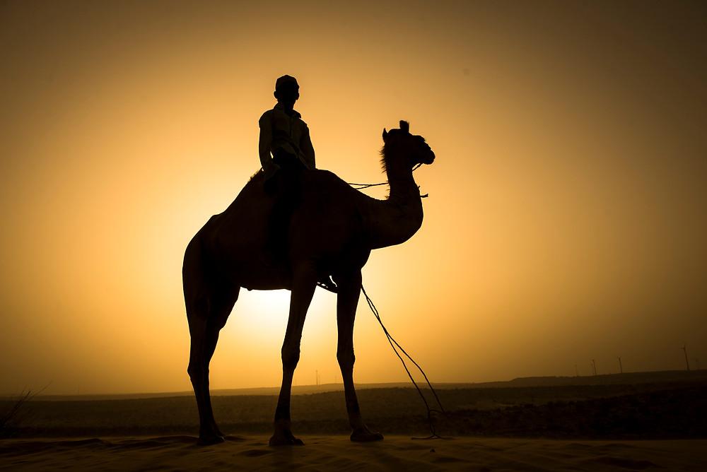 El camellero