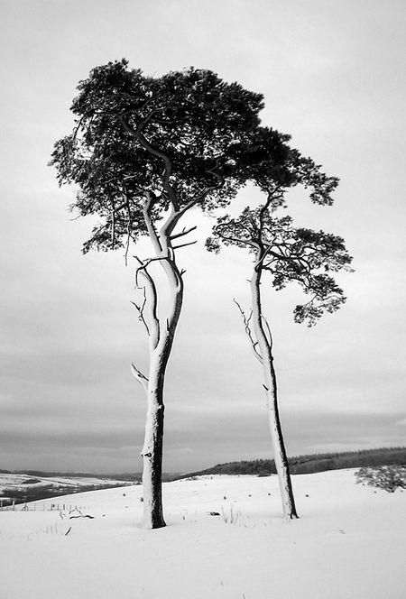 Trees - 1st Prize - Duncan Mcbride.jpg