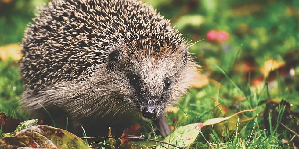 AGAS Talk: 'Preparing the Garden for Wildlife' with Alan Edmondson