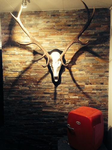 SDten från Kongebro, hjort från Scotska bergen Glen Clova