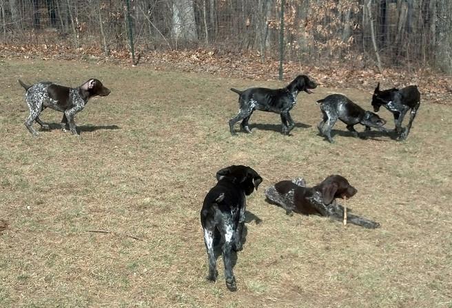 Gestalt X Ulla Puppies