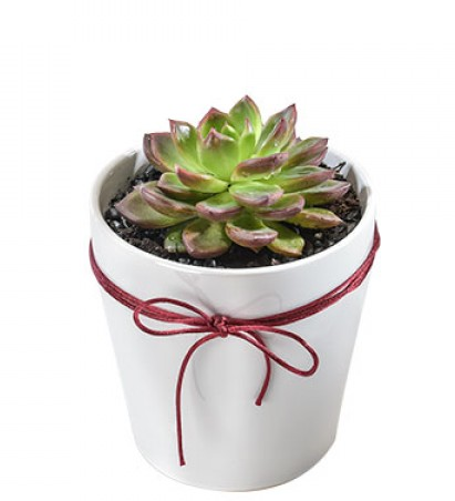 z Potted Succulant.PNG