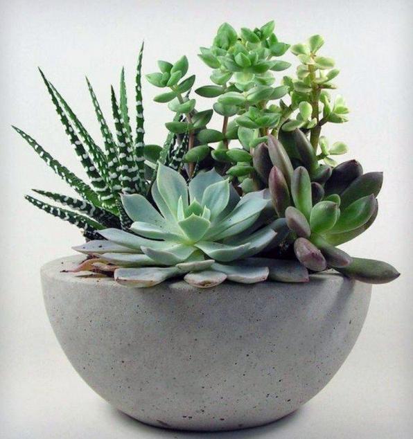 Suculant Planter