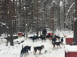 Humane Dog Sledding Ontario