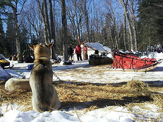Dog Sledding Algonquin Park