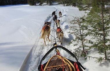 Dog Sledding Algonquin Park