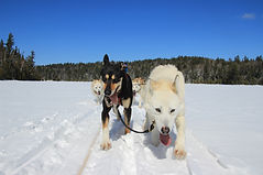 DOG SLEDDING ALGONQUIN