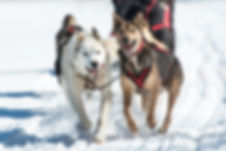 Snow Forest Adventures - Dog Sledding in Algonquin Park and North