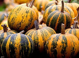 oilseed_pumpkin.jpg