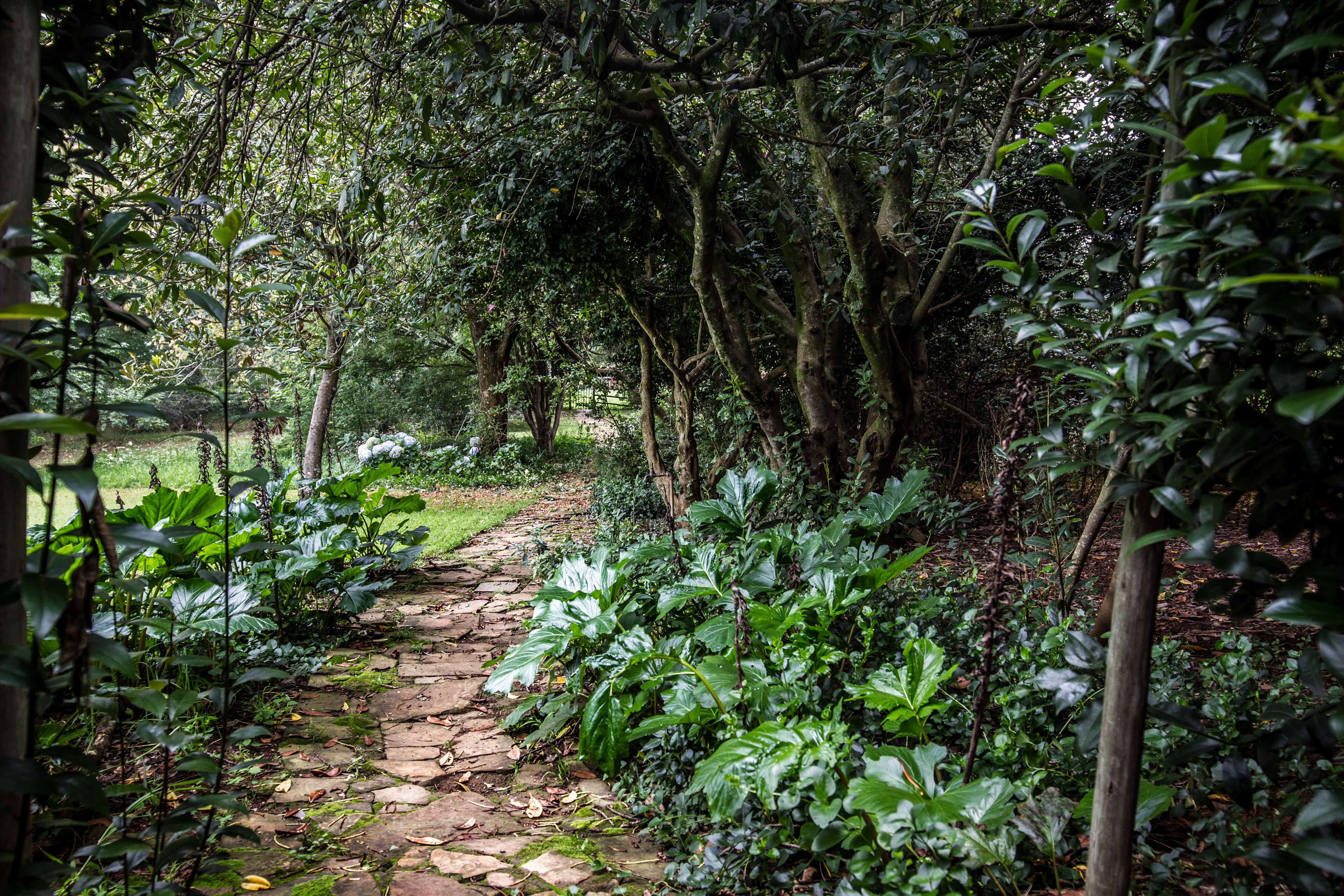 Wisteria Garden 8