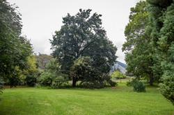 Wisteria Garden 9