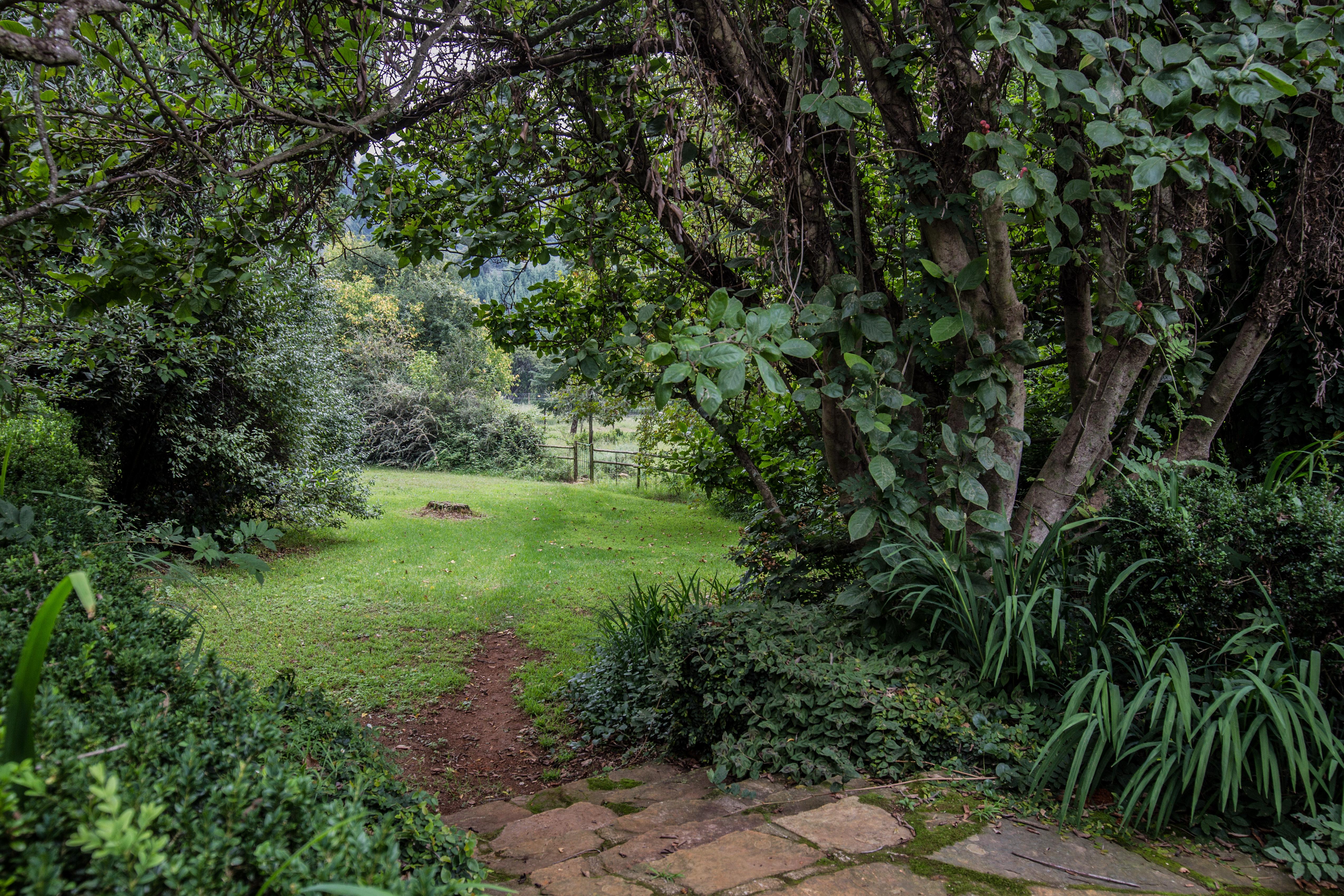 Wisteria Garden 7