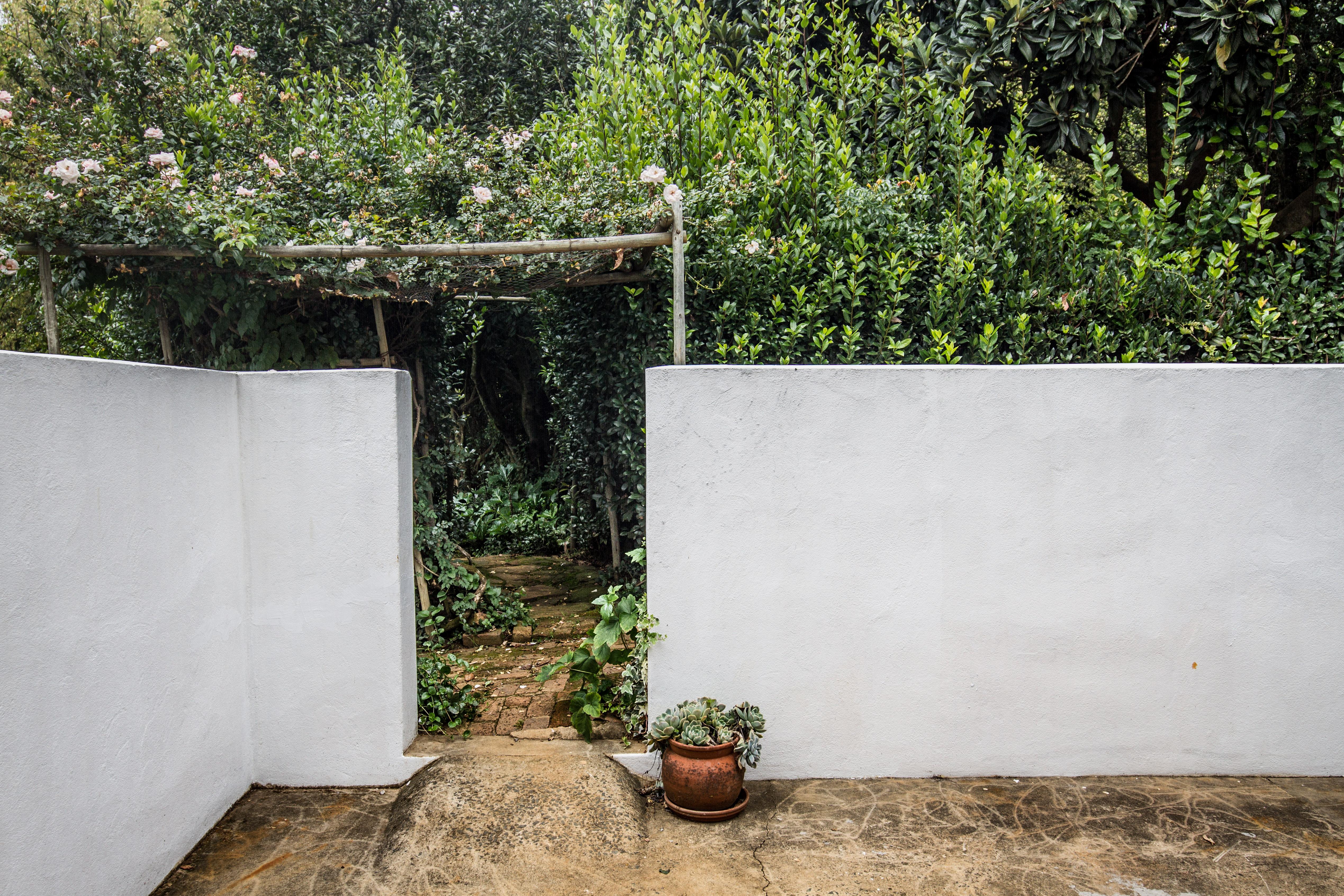 Wisteria courtyard