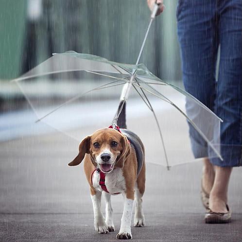 Paraguas para mascotas