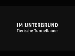 Im Untergrund - Tierische Tunnelbauer (N24)