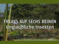 Freaks auf sechs Beinen - Unglaubliche Insekten (N24)