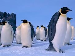 Leben im Frack - Pinguine (N24)