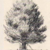 2a_White Pine.jpg