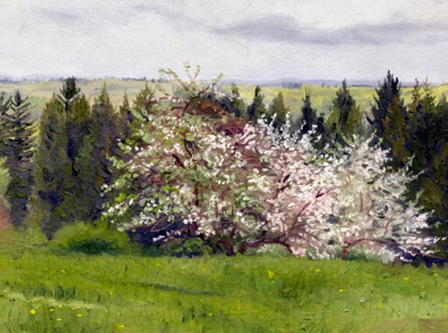 *REshoot-Apple trees.jpg