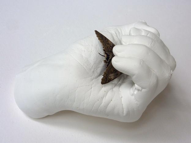 2014 Plaster, butterfly