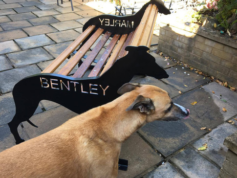 "Greyhound ""Bentey"" Bench"